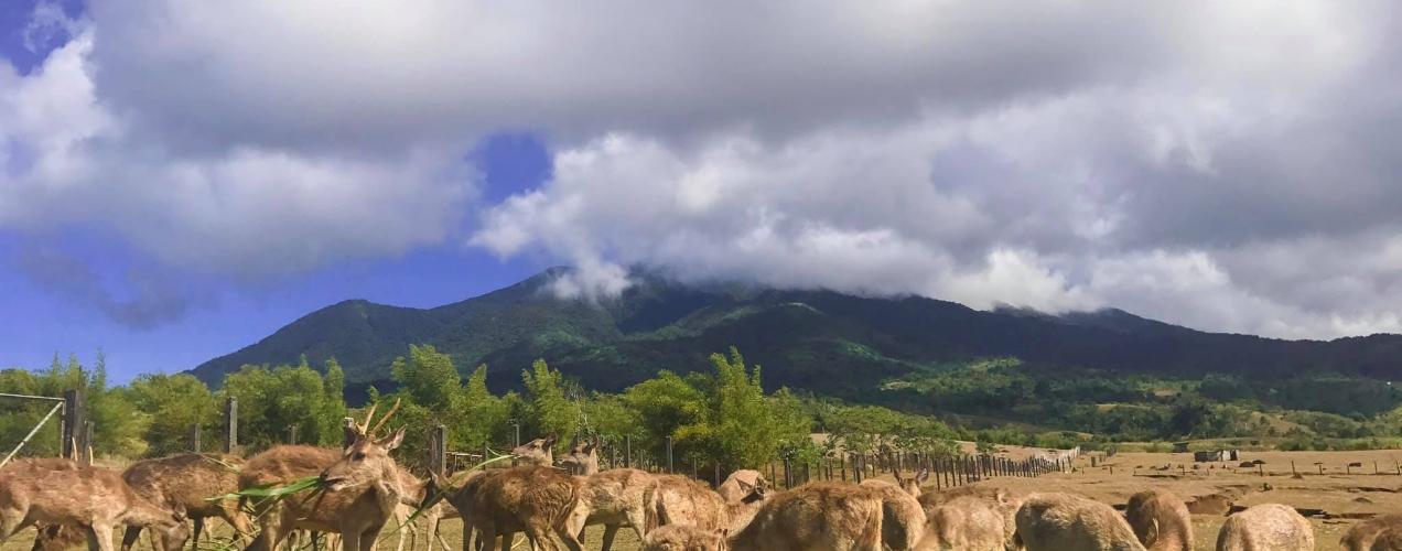 Camarines Sur: Deer Farm and Hibiscus Garden