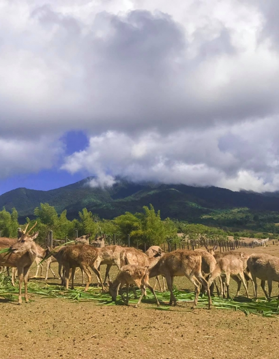 Camarines Sur: Deer Farm and Hibiscus Garden